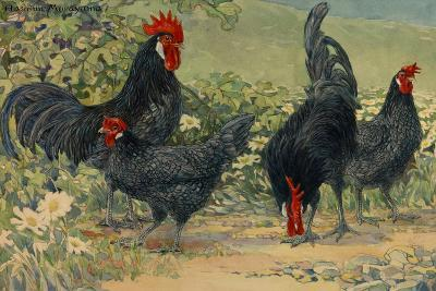 Four Blue Andalusian Chickens, or Historically Blue Minorca Chickens-Hashime Murayama-Giclee Print