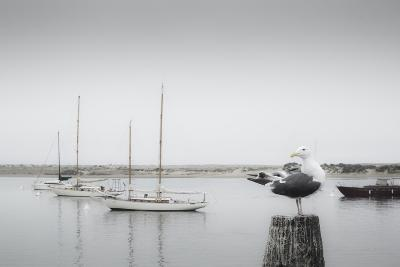 Four Boats & Seagull-Moises Levy-Photographic Print