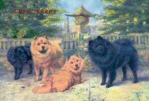 Four Champion Chow-Chows