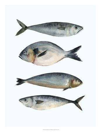 Four Fish II-Emma Scarvey-Giclee Print