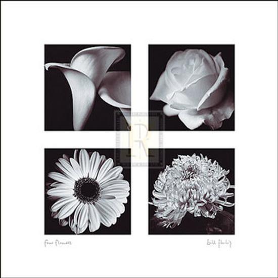 Four Flowers-Bill Philip-Art Print