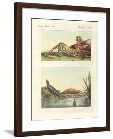 Four-Footed Animals of Australia--Framed Giclee Print