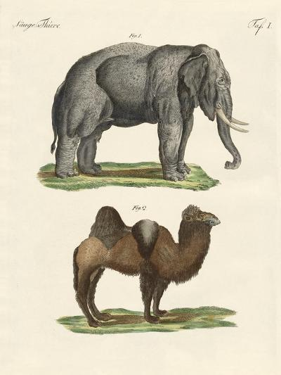 Four-Footed Animals--Giclee Print