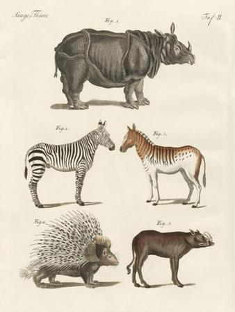Four-Footed Animals