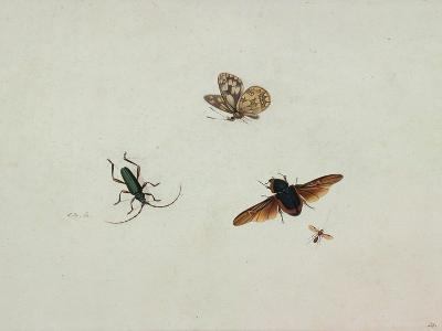 Four Insects, End of 17th C-Johannes Bronkhorst-Giclee Print