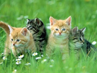 Four Kittens-Frank Lukasseck-Photographic Print