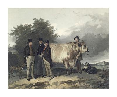 Four Men With A Bull-Richard Ansdell-Premium Giclee Print