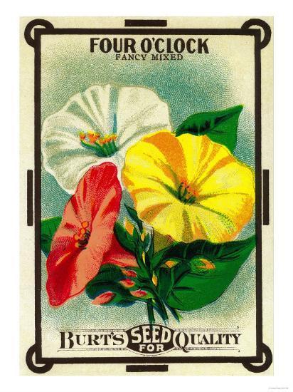 Four O'Clock Seed Packet-Lantern Press-Art Print