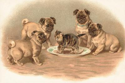 Four Pug Dogs Sitting around a Kitten on a Plate-English School-Giclee Print