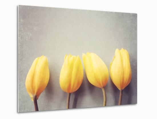 Four Yellow Tulips Against a Textured Grey Blue Background-Susannah Tucker-Metal Print