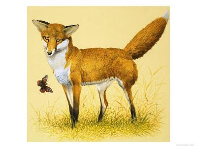 Fox and Butterfly--Giclee Print