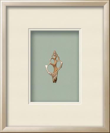 Fox Shell Shadowbox - Seafoam
