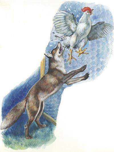 Fox (Vulpes Vulpes) Trying to Catch Rooster While Raiding Hen House--Giclee Print