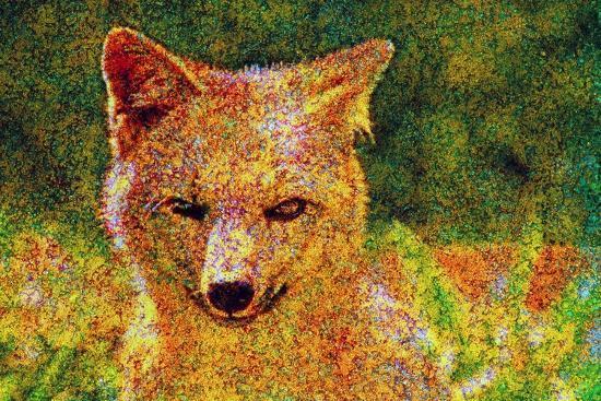 Fox--Photographic Print