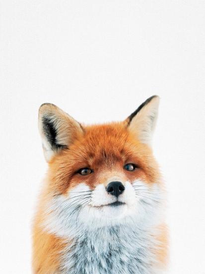 Fox-Tai Prints-Photographic Print