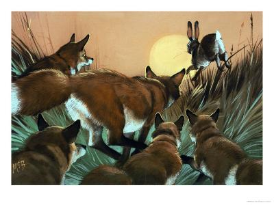 Foxes Chasing a Rabbit--Giclee Print