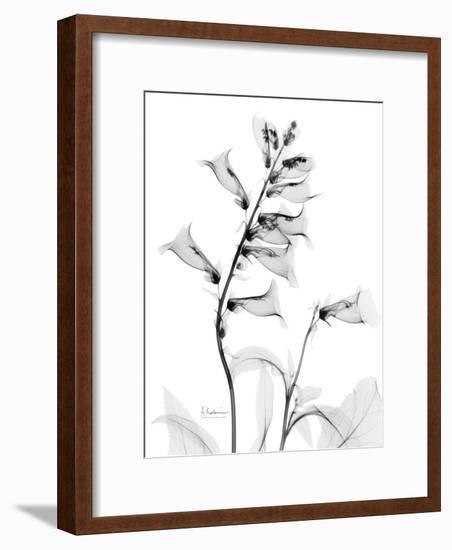 Foxglove Gray-Albert Koetsier-Framed Premium Giclee Print
