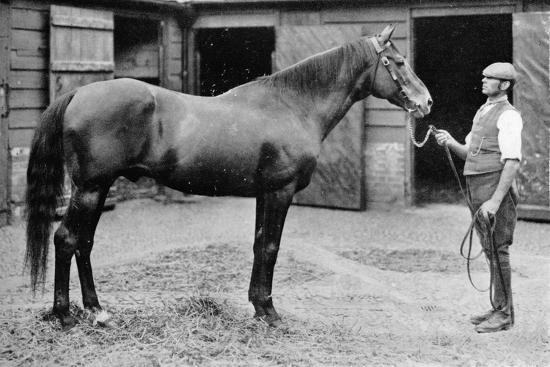 'Foxhall', 1880-1904, (1911)-Unknown-Photographic Print