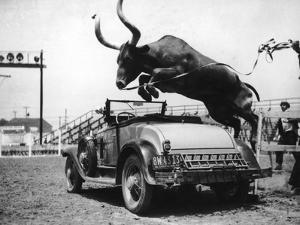 Hurdling Steer by FPG