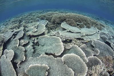 Fragile Corals Grow in Shallow Water in Komodo National Park-Stocktrek Images-Photographic Print