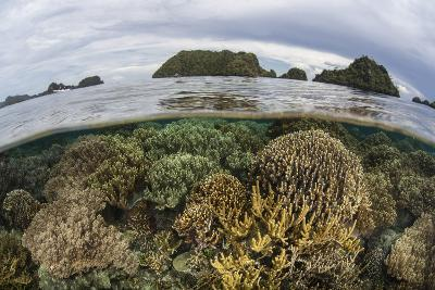 Fragile Corals Grow in Shallow Water in Raja Ampat, Indonesia-Stocktrek Images-Photographic Print