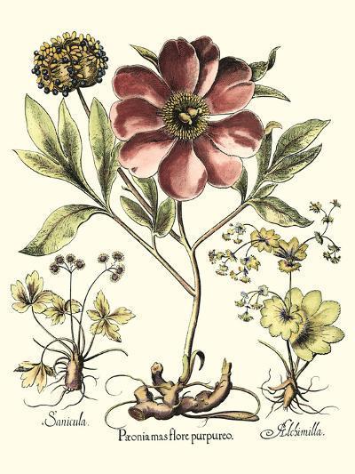 Framboise Floral I-Besler Basilius-Art Print