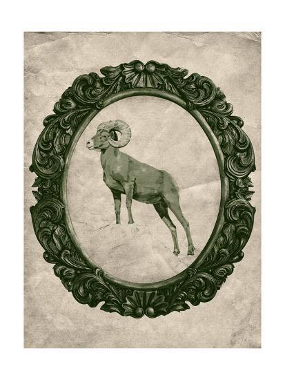 Framed Bighorn Sheep in Evergreen-THE Studio-Premium Giclee Print