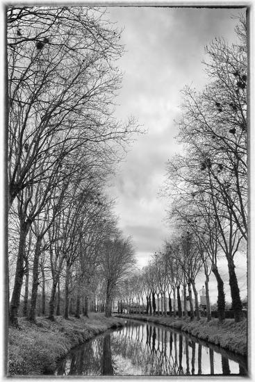 France, Burgundy, Nievre. Trees with Bird Nests on the Nivernais Canal-Kevin Oke-Photographic Print