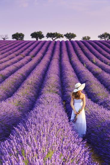 France, Provence Alps Cote d'Azur, Haute Provence, Plateau of Valensole, Lavander Fields-Michele Falzone-Photographic Print