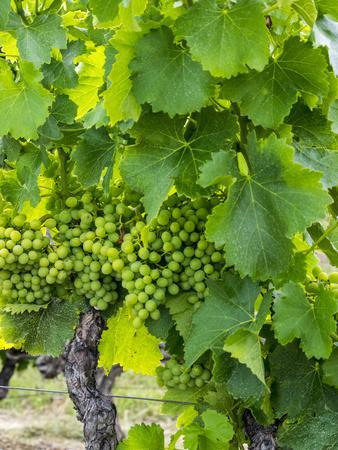 https://imgc.artprintimages.com/img/print/france-provence-french-vineyard-on-rolling-hillside_u-l-q12tcnp0.jpg?p=0