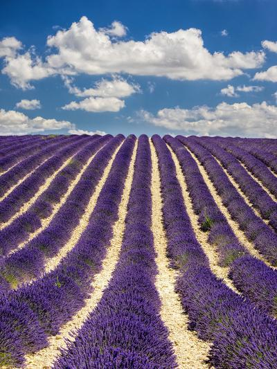 France, Provence, Lavender Field on the Valensole Plateau-Terry Eggers-Photographic Print