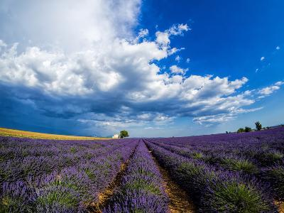 France, Provence, Old Farm House in Field of Lavender-Terry Eggers-Photographic Print