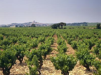 France, Rhone Valley, Chateauneuf Du Pape, Wine-Growing Area-Thonig-Photographic Print