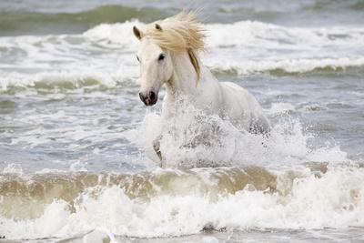 https://imgc.artprintimages.com/img/print/france-the-camargue-saintes-maries-de-la-mer-camargue-horse-in-the-mediterranean-sea_u-l-q1d591x0.jpg?p=0