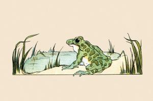 Pond Frog by Frances Beem