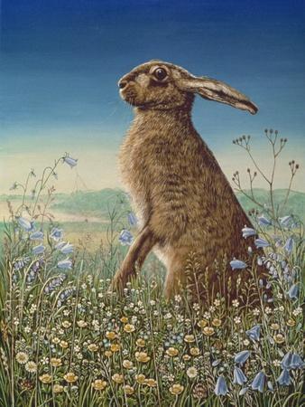 Hare, 1984