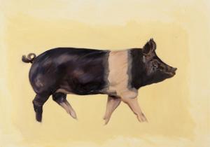 Hampshire pig, 2016 by Francesca Sanders