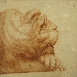 A Lion's Head in Profile by Francesco De Rossi Salviati Cecchino