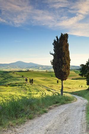 Italy, Tuscany, Siena District, Orcia Valley, Country Road Near Pienza. by Francesco Iacobelli