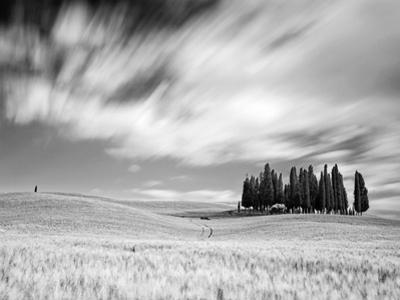 Italy, Tuscany, Siena District, Orcia Valley, Cypress on the Hill Near San Quirico D'Orcia by Francesco Iacobelli