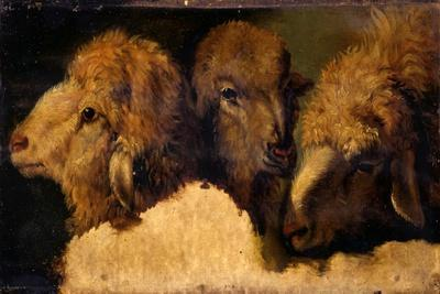 Painted Study of Sheep Heads