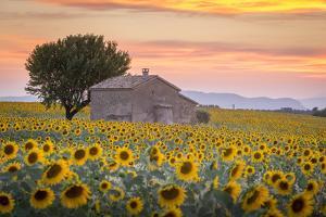 Provence, Valensole Plateau, France by Francesco Riccardo Iacomino