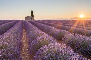 Provence, Valensole Plateau by Francesco Riccardo Iacomino