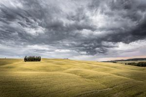 Tuscany, Val D'Orcia, Italy. Cypress Trees in a Yellow Meadow Field with Clouds Gathering by Francesco Riccardo Iacomino