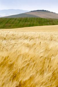 Val D'Orcia, Tuscany, Italy. Yellow Meadow and Green Hills by Francesco Riccardo Iacomino