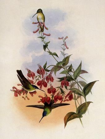 https://imgc.artprintimages.com/img/print/francia-s-azure-crown-cyanomyia-franci_u-l-q1bvl020.jpg?p=0