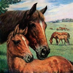 """Mares and Foals,""May 1, 1947 by Francis Chase"