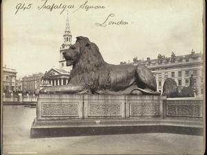 Stone Lion, Trafalgar Square, London, 19th Century by Francis Frith