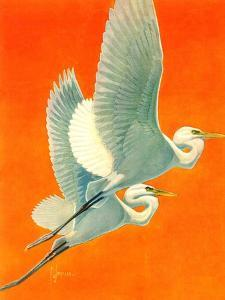 """""""Flying Storks,""""June 19, 1937 by Francis Lee Jaques"""