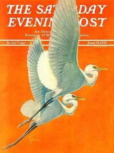 """""""Flying Storks,"""" Saturday Evening Post Cover, June 19, 1937 by Francis Lee Jaques"""